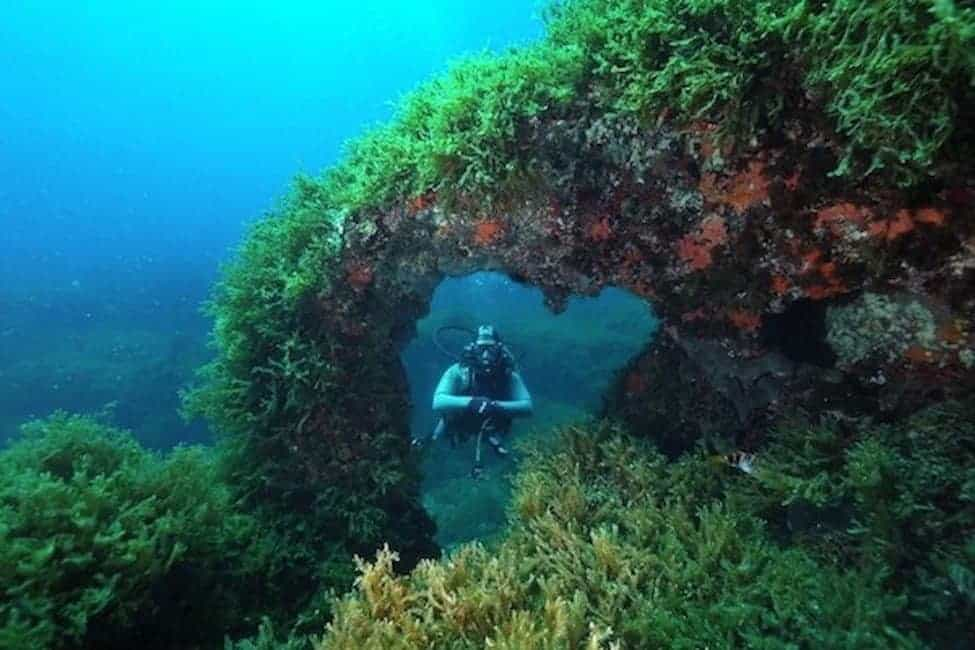 Fortizza_Reef_Heart-Arch